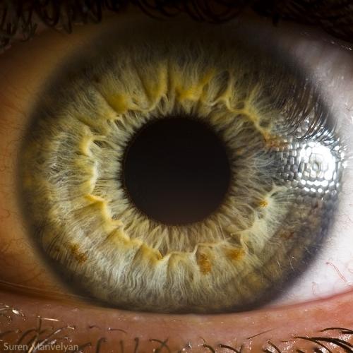 Human Eye 16