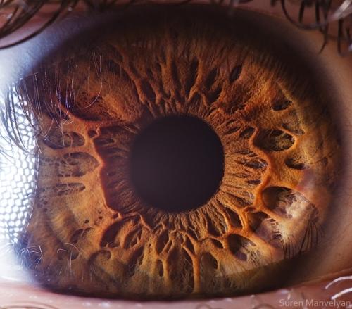 Human Eye 22