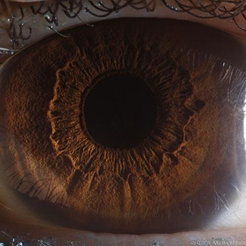Human Eye 24