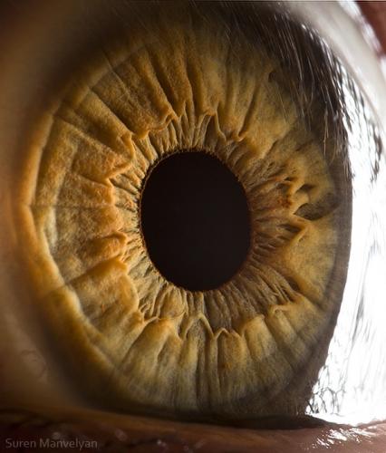 Human Eye 26