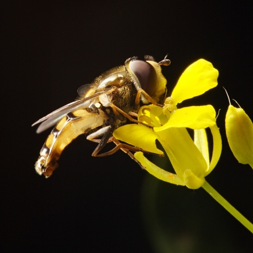 View the album Hidden Life of insects