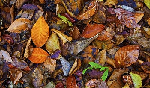 Autumn at Lastiver
