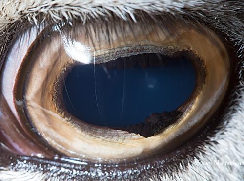 Link to Animal Eyes 2