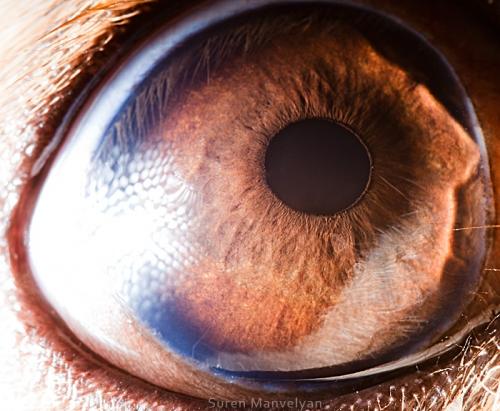 Link to Animal Eyes