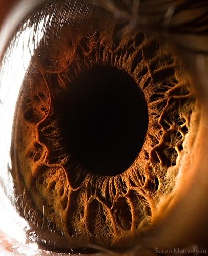 Human Eye 3