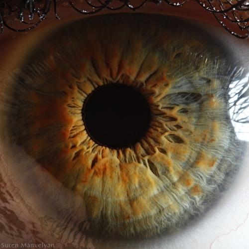 Human Eye 4