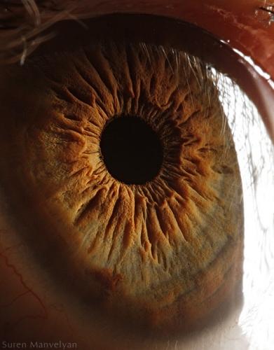 Human Eye 6