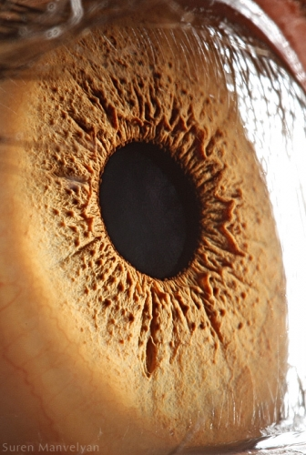 Human Eye 8