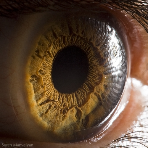 Human Eye 15