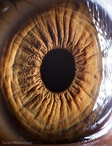 Human Eye 23