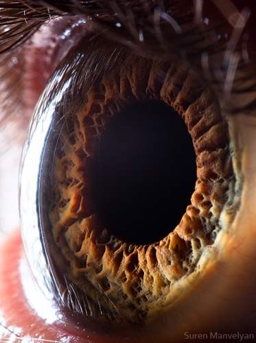 Human Eye 25