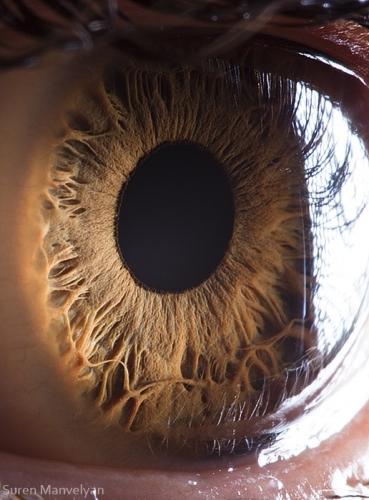 Human Eye 27