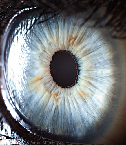 Human Eye 28
