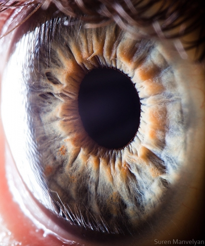 Human Eye 2