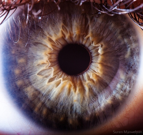 Human Eye 1