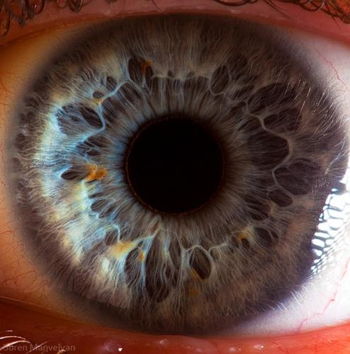 Human Eye 9
